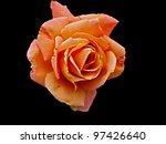 Faded Orange Rose Isolated On...