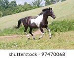 Nice Paint Horse Running