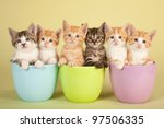 Stock photo six cute kittens sitting inside in pastel containers 97506335