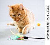 Stock photo studio portrait of red cat playing with toys isolated on grey background 97523168