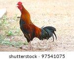 thai chicken the deflection | Shutterstock . vector #97541075