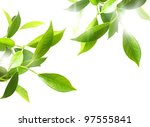 Green Leafs Isolated On White...
