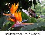 Flying Hummingbird At A...