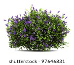 Lilac Flowers Bush Isolated On...
