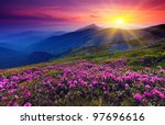 Stock photo magic pink rhododendron flowers on summer mountain 97696616
