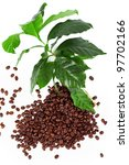 coffee beans with fresh coffee arabica branch isolated on white - stock photo