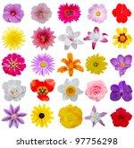 Set Of Seasonal Spring Flowers