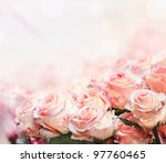 closeup of beautiful pink roses ... | Shutterstock . vector #97760465