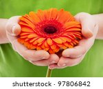 Orange African Daisy In Man's...