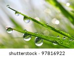 fresh grass with dew drops... | Shutterstock . vector #97816922