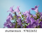 Beautiful Blue Flowers...