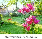 Lilies on a summer residence in the rays of a sun - stock photo