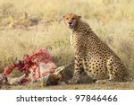 Cheetah Eats All. Do I Look...