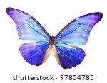 Blue Purple Butterfly On A...