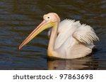 A Swimming Pelican In A Dutch...