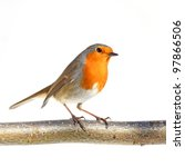 Red Robin On A Branch  Against...