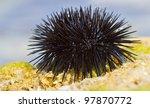 sea urchin on a rock by the sea | Shutterstock . vector #97870772