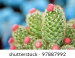 Cactuses with Pink Flowers On It - stock photo