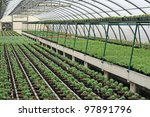 interior of a greenhouse for... | Shutterstock . vector #97891796