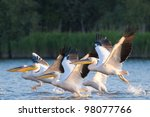 white pelican flock in flight | Shutterstock . vector #98077766