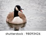 Canada Goose Calling On The...