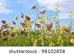 Many Butterfly With Yellow...