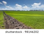 Green field with young wheat with blue sky at the background - stock photo