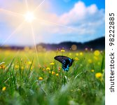 Stock photo big tropical butterfly sitting on green grass field with flowers 98222885