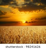Sunset Wheat Field