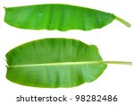 Fresh Banana Leaf Isolated Wit...