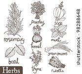 culinary herbs set | Shutterstock .eps vector #98288648