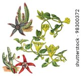 stapelia asterias  above  ... | Shutterstock . vector #98300372