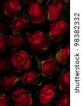 Stock photo red roses on a black background low key 98382332