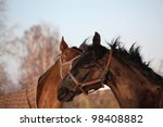 brown and black horses playing... | Shutterstock . vector #98408882