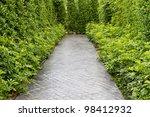 Green Garden And Path
