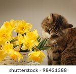 Young Cat With Yellow Flowers