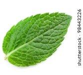 fresh mint leaves isolated on... | Shutterstock . vector #98443226