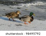 Male And Female Mallards...