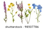 Wild Flowers Collection...