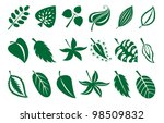 vector leaves collection