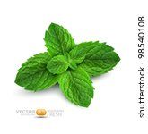 vector fresh mint leaves on a... | Shutterstock .eps vector #98540108