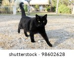 Stock photo beautiful black cat walking in the garden 98602628
