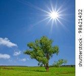 beautifull green tree in a...   Shutterstock . vector #98621432