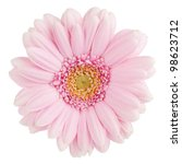 Pink Gerbera Flower. Isolated...