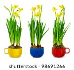 yellow narcissus and daffodil... | Shutterstock . vector #98691266