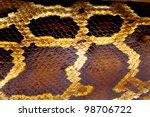 Boa Snake Skin From Alive Body...
