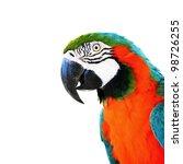 Colorful Parrots Head Closeup...