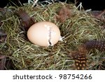 Little unborn chick trying to open his egg - stock photo