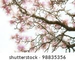 Pink Magnolia Flowers Abstract Background - stock photo