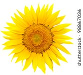 Sunflower Close Up Isolated On...